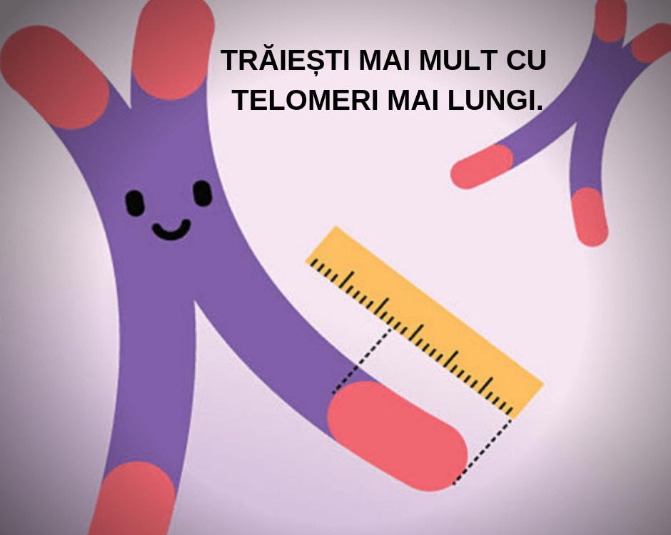 conexiunea intre laminine si telomeri